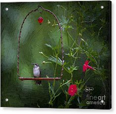 Angel Resting Acrylic Print by Cris Hayes