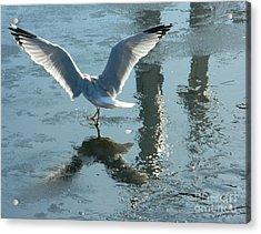 Angelic Wings Acrylic Print