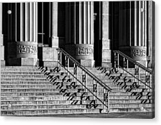 Angell Hall Steps Acrylic Print