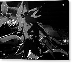 Acrylic Print featuring the photograph Angels Or Dragons B/w by Martin Howard
