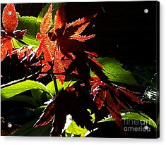 Acrylic Print featuring the photograph Angels Or Dragons by Martin Howard