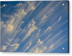 Angels Trumpets Acrylic Print