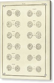 Anglo-saxon Coins Acrylic Print by Middle Temple Library