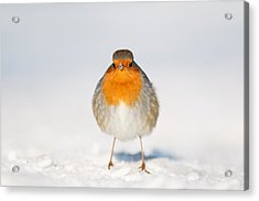 Angry Bird _ Robin In The Snow Acrylic Print by Roeselien Raimond