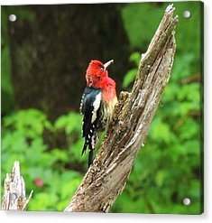 Acrylic Print featuring the photograph Angry Bird by Karen Horn