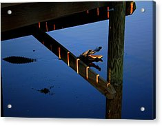 Angry Gator Acrylic Print by Miles Stites