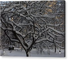Angular Tree With Snow Acrylic Print by Winifred Butler