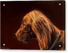 Acrylic Print featuring the photograph Angus Irish Red Setter by Wallaroo Images