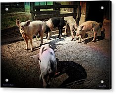 Acrylic Print featuring the photograph Angustown Piggies by Cynthia Lassiter