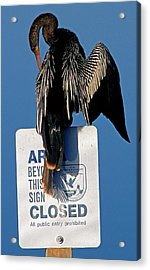 Anhinga Perched On A Signpost Acrylic Print