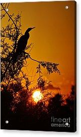 Anhinga Sunset Acrylic Print