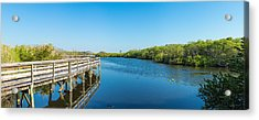 Anhinga Trail Boardwalk, Everglades Acrylic Print