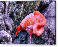 Animal 1 Acrylic Print