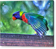Animal 3 Acrylic Print