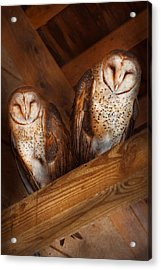 Animal - Bird - A Couple Of Barn Owls Acrylic Print by Mike Savad