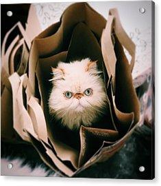 Animal Eye Contact Acrylic Print by Michael Lofenfeld Photography