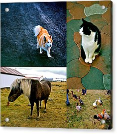 Acrylic Print featuring the photograph Animal Farm by HweeYen Ong