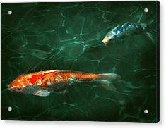 Animal - Fish - Koi - Another Fish Story Acrylic Print by Mike Savad