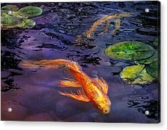 Animal - Fish - There's Something About Koi  Acrylic Print by Mike Savad