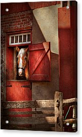 Animal - Horse - Calvins House  Acrylic Print by Mike Savad