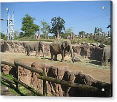 Animal Park - Busch Gardens Tampa - 01132 Acrylic Print by DC Photographer