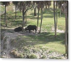 Animal Park - Busch Gardens Tampa - 01136 Acrylic Print by DC Photographer