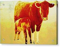 Animals Cow And Calf Acrylic Print by Ann Powell
