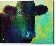 animals - cows- Black Cow Acrylic Print by Ann Powell