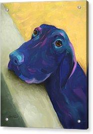 Animals Dogs Labrador Retriever Begging Acrylic Print by Ann Powell