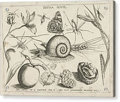 Animals, Plants And Fruits Around A Snail Acrylic Print