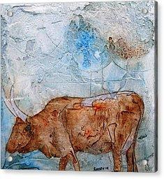 Ankole Cow Acrylic Print