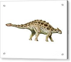 Ankylosaurus Armored Dinosaur Acrylic Print