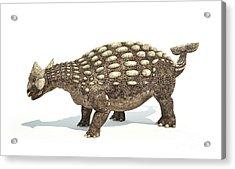 Ankylosaurus Dinosaur On White Acrylic Print
