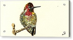 Anna S Hummingbird Acrylic Print