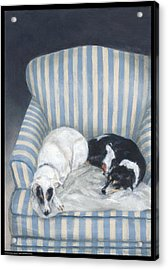 Annie And Spike Napping Acrylic Print by Diana Moses Botkin