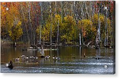 Annual Meet And Greet At The Pond Acrylic Print