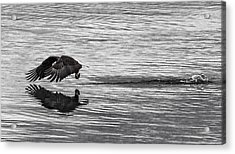 Another After The Catch D0124 Acrylic Print by Wes and Dotty Weber