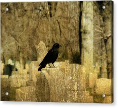 Another Day For Crow In The Graveyard Acrylic Print by Gothicrow Images