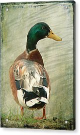 Acrylic Print featuring the photograph Another Duck ... by Chris Armytage