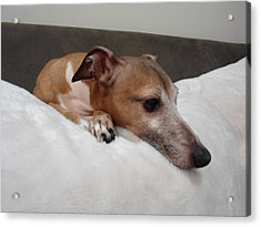 Another Relaxing Day - Italian Greyhound  Acrylic Print by Santos Arellano