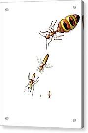 Ant Castes Acrylic Print by Claus Lunau