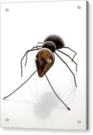 Ant Acrylic Print by Lawrie Simonson