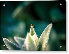 Ant No Thing To Fight About... There's Plenty Of Light Acrylic Print