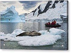 Antarctic Serenity... Acrylic Print