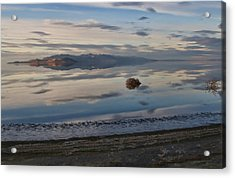 Acrylic Print featuring the photograph Antelope Island - Lone Tumble Weed by Ely Arsha