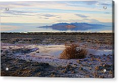 Acrylic Print featuring the photograph Antelope Island - Tumble Weed by Ely Arsha