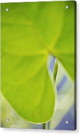 Anthurium Acrylic Print by Silke Magino