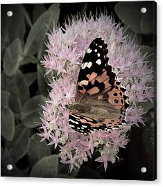 Antique Monarch Acrylic Print by Photographic Arts And Design Studio