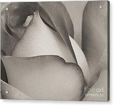 Antique Rose Acrylic Print by Sabrina L Ryan