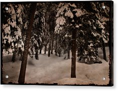 Antique Woodscape Acrylic Print